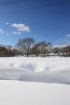 雪の下.JPG